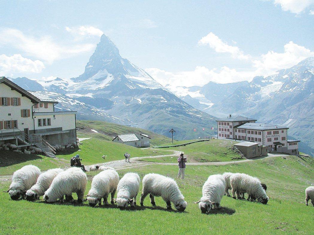 運氣好的話,可以在附近看到當地特有的黑面羊。 圖/聯合報系資料照