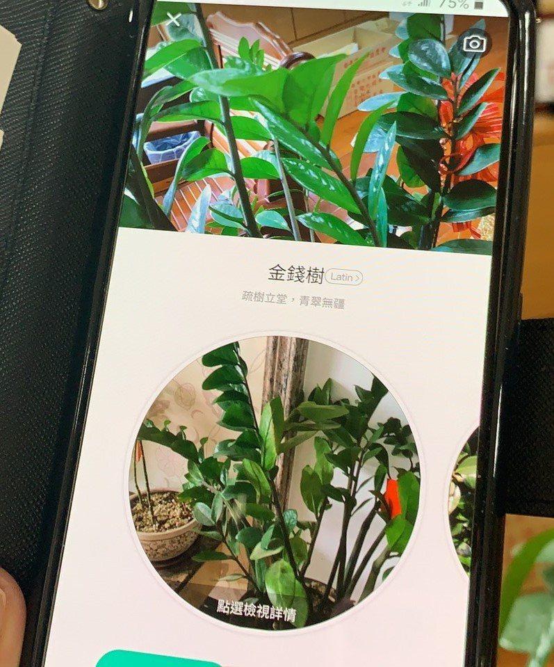 手機App「形色」被稱為「花草辨識神器」,只要透過App拍花草照片,軟體就會自動辨識植物名稱。記者吳淑玲/攝影