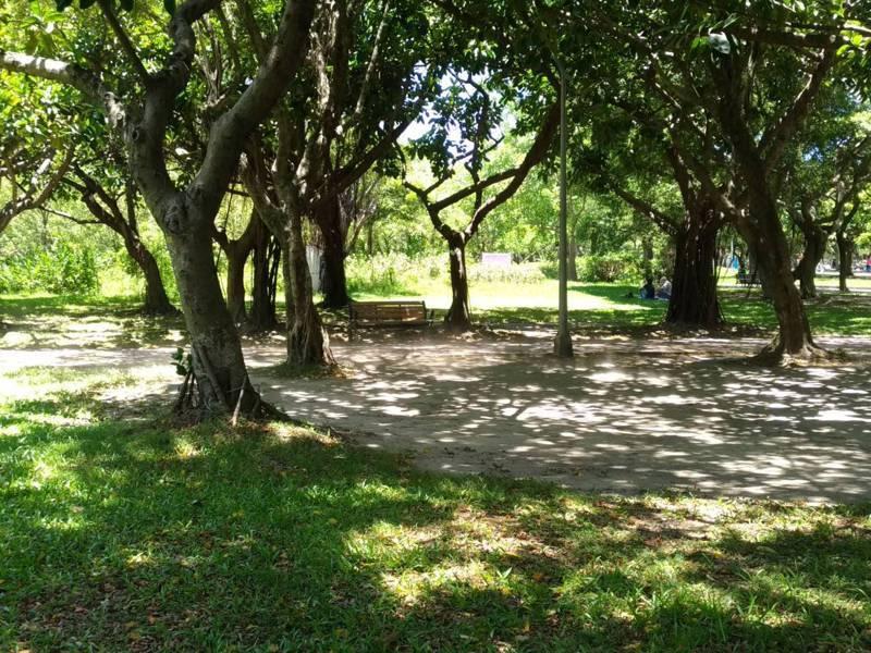台灣生態旅遊協會理事長郭城孟說,大安森林公園使用超限,導致綠地過度負荷,草地、樹木生長品質差。記者林麗玉/攝影