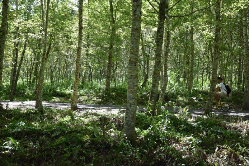 大農大富平地森林園區樹蔭成林,是夏天戶外消暑的地方。 圖/王思慧 攝影