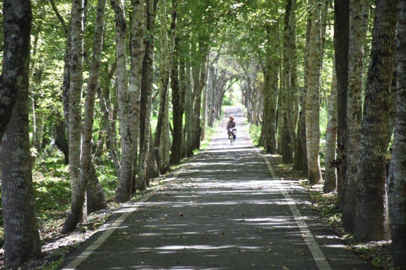 大農大富平地森林園區有自行車道,可一邊騎單車一邊享受芬多精。 圖/王思慧 攝影