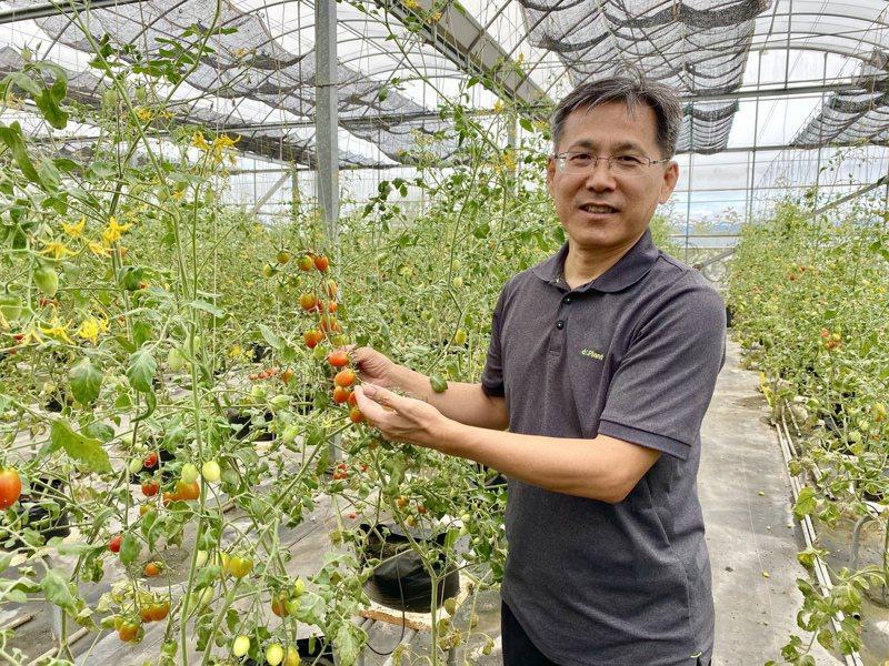 智耕執行長黃明發今日宣布,全台首創低鉀番茄即將上市。記者宋健生/攝影