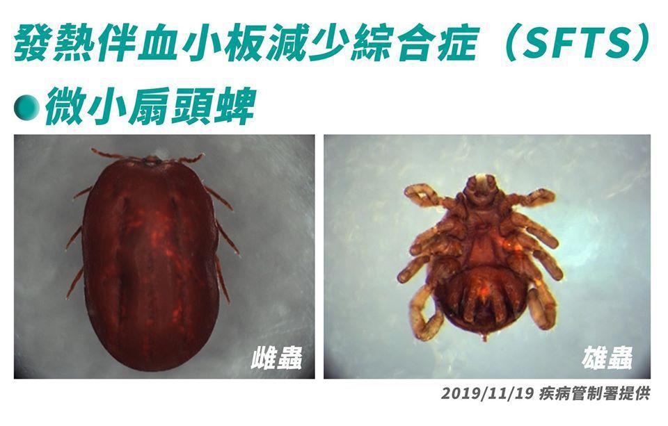 蜱蟲叮咬會引發「發熱伴血小板減少綜合症」,疾管署列為第四類法定傳染病。圖/疾管署...