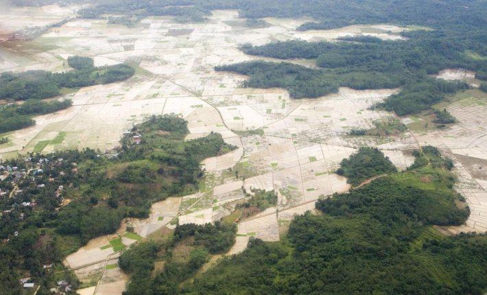 亞馬遜雨林近 50 年受到人類開發,生態遭劇烈破壞。 圖/WWF