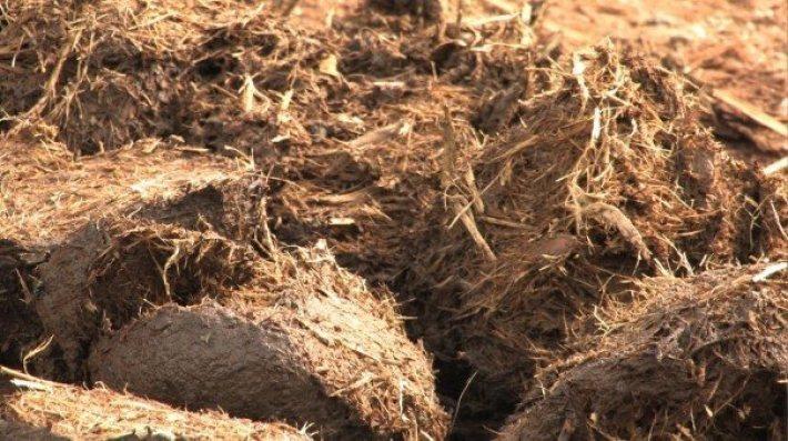 大象糞便能保留大量植物纖維,為絕佳的紙漿原料。 圖/PooPooPaper ...