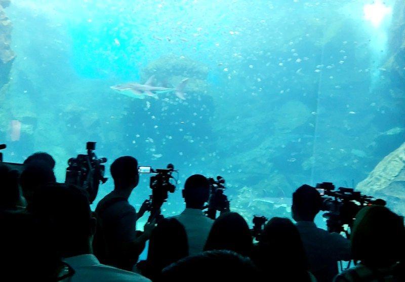 桃園市青埔X-park八景島水族館,超大魚缸魚群蜂集吸睛。 圖/曾增勳 攝影