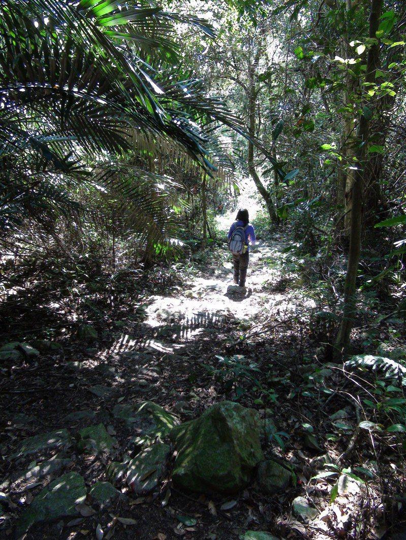 德芙蘭步道樹林茂密,走起來相當舒服。  聯合報系資料照片