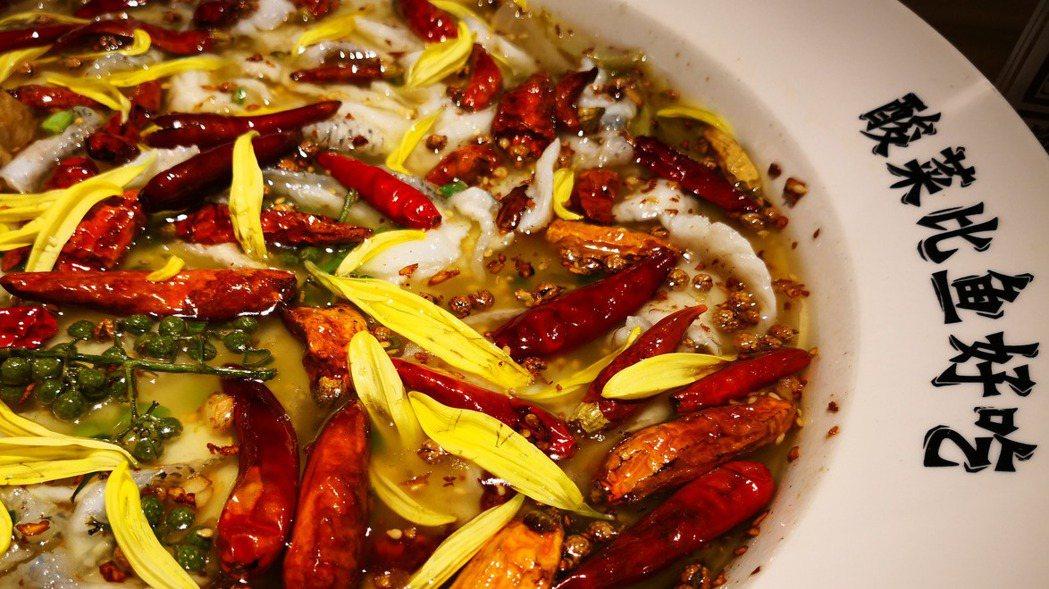臉盆大的酸菜魚,一上桌就會被它的視覺震住了。 梅春帆/攝影