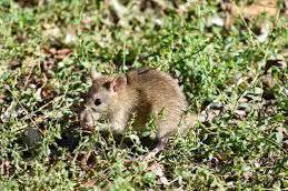 開發大自然惹禍 病原動物傳人機率增