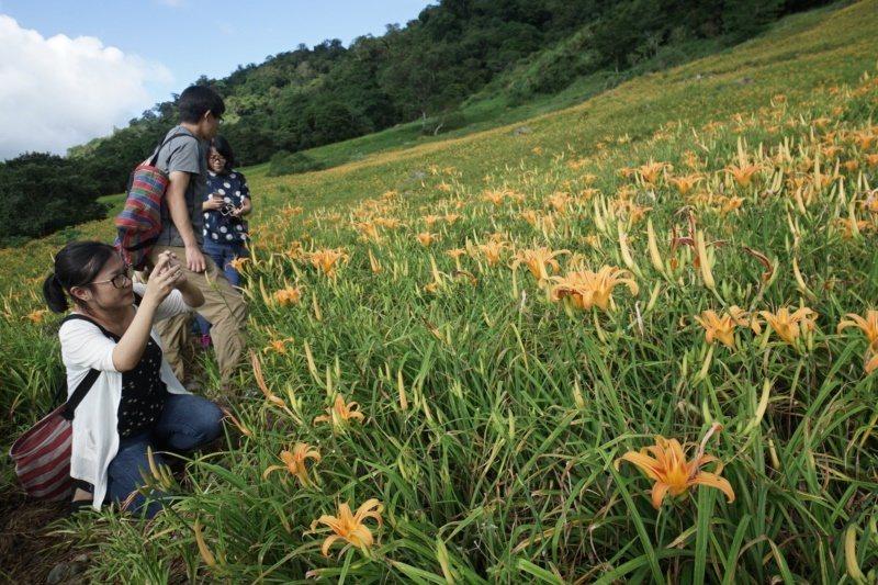 花蓮南區有全台最大的金針花海,每年都吸引大批遊客上山賞花。 圖/報系資料照片