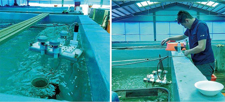 水質偵測系統與現場操作實況。 農科院/提供