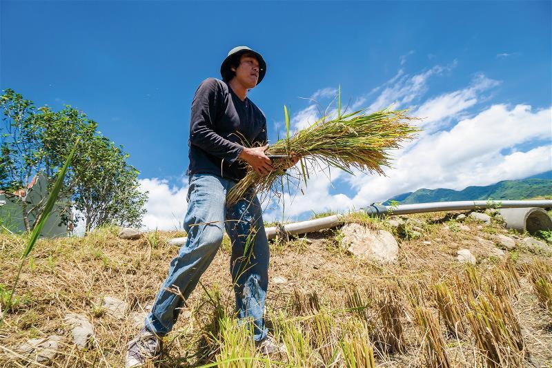 原本是逃離家鄉的農村子弟魏瑞廷,返家後用科技等專業,將自家稻米行銷國際。