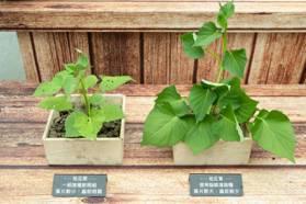 咖啡渣的7大妙用!除臭、增香、驅蟲還能當堆肥