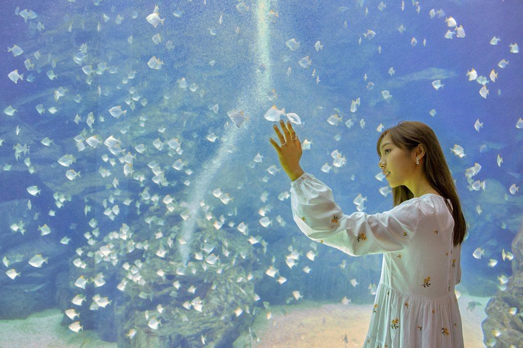 蔡佩軒到大型水生公園,體認「小美人魚」心境。圖/索尼提供