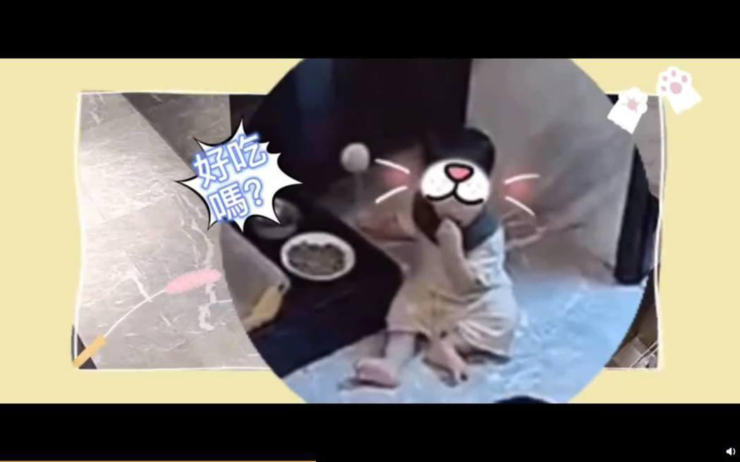 安以軒兒子拿起貓飼料往嘴裡塞。 圖/擷自安以軒微博