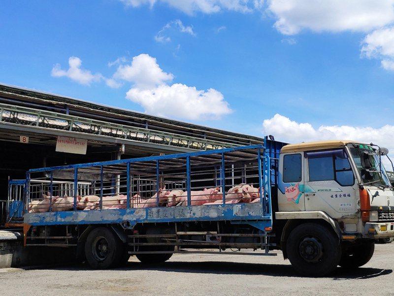 台灣自口蹄疫區除名,豬肉拚外銷挑戰大。記者謝進盛/攝影