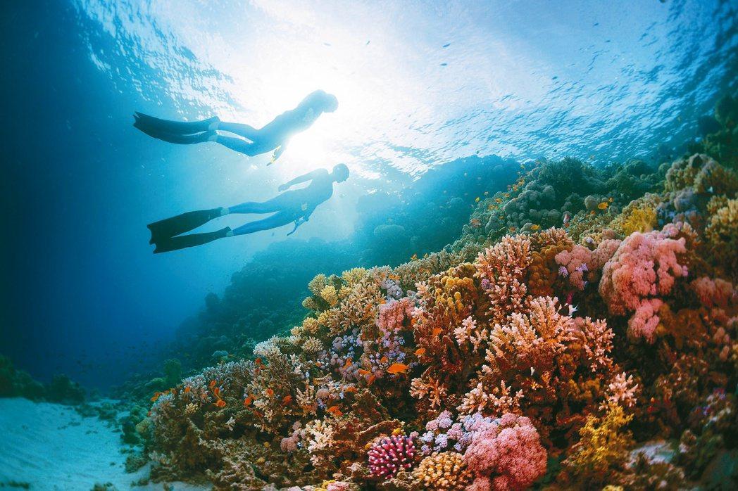 自由潛水下潛深度較淺,但仍可能因為不諳水性或不熟悉潛水姿勢而出現溺水意外。圖/1...