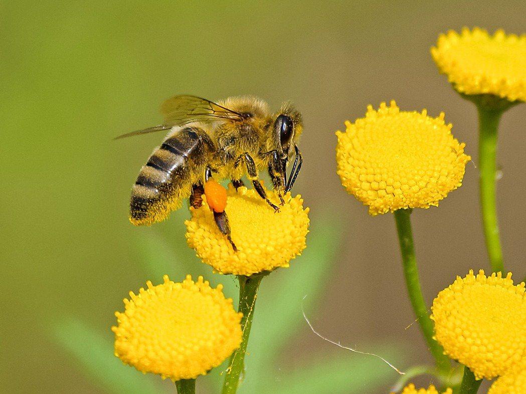 歐盟承諾2030年前殺蟲劑使用量減少50% 圖/pixabay