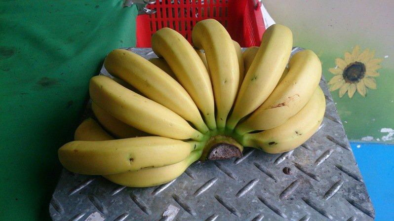 集集山蕉有著更扎實的肉質口感 ,味道香濃、甜度Q感更高,將取得香蕉良好農業規範認證,明年進軍本東京奧運會,打開日本市場。記者黑中亮/攝影