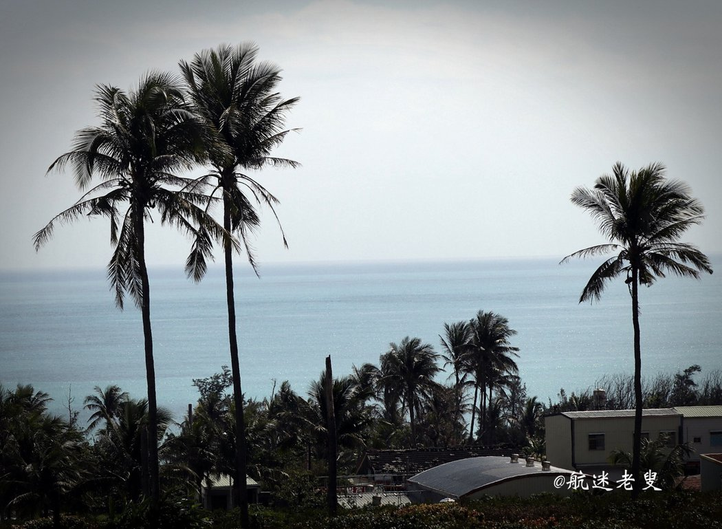 眺望椰林,看山看海看椰樹, 青青山巒,高高椰林,藍藍海水, 令人目不暇接,讓人興趣盎然!