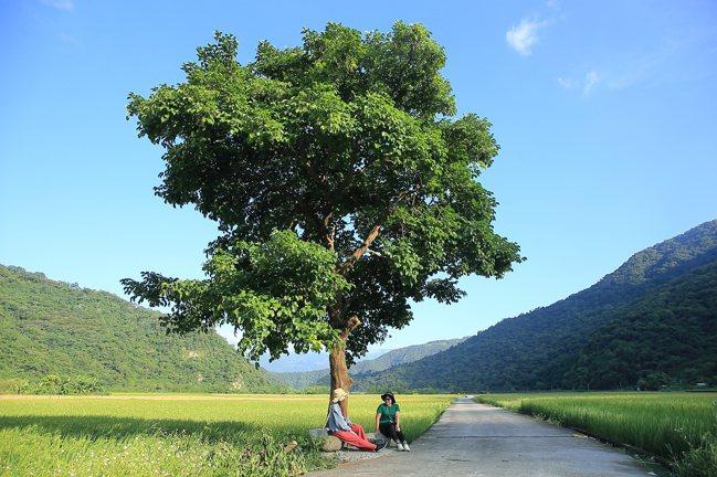 玉里版的金城武樹,乃是當地人的私房景點。記者陳睿中/攝影