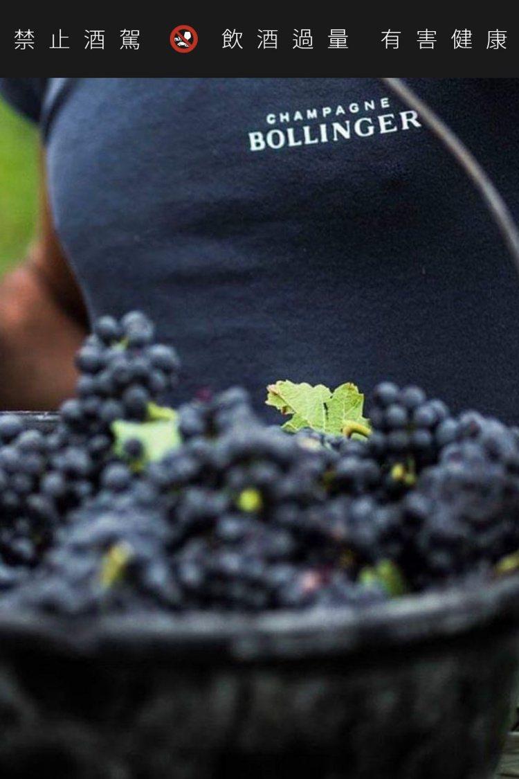 新酒款採用100% Pinot Noir釀製。圖/伯蘭爵提供
