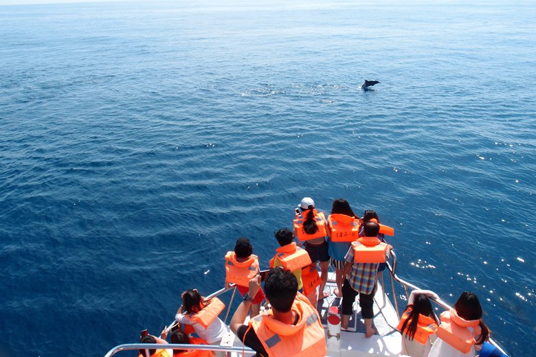 在賞鯨行為已產業化的結構下,身為海洋保育主管機關的海保署無可迴避,且需積極進行「賞鯨產業化管理」的溝通協調。 圖/作者提供
