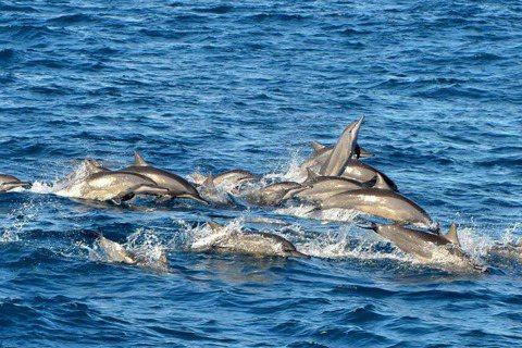 張卉君/跳高高不是在表演:從遊艇「衝海豚」談偏狹的海洋教育