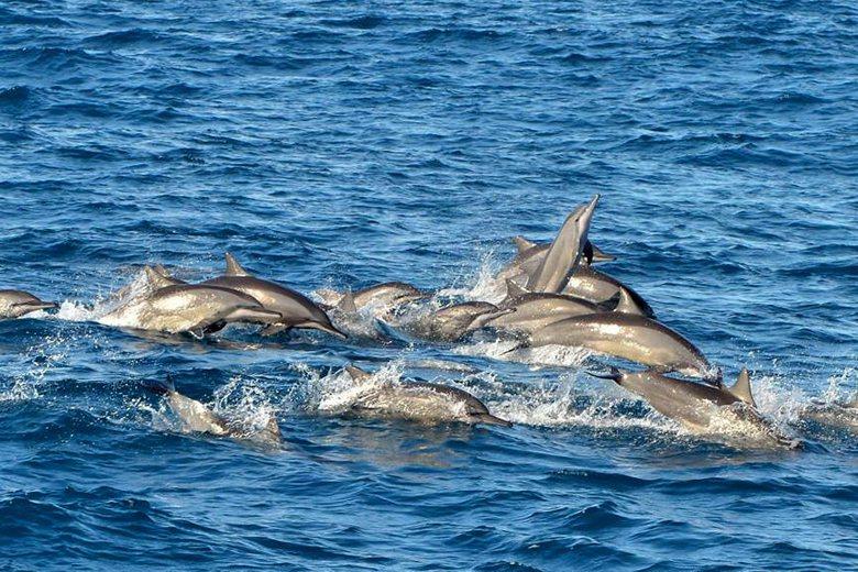 圖為飛旋海豚。 圖/成功晉領號提供