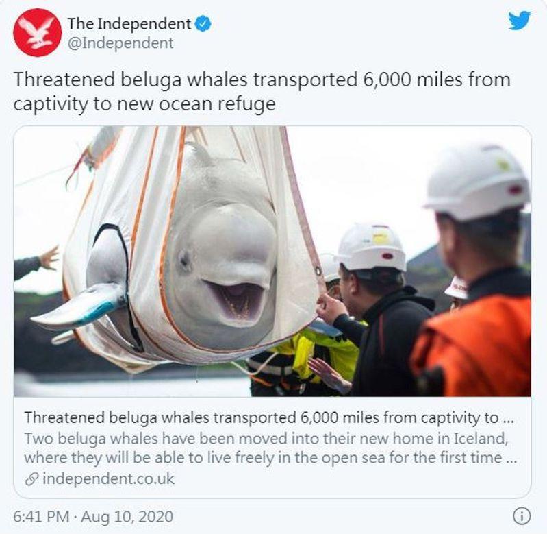 動物保護專家為白鯨設計的特製「擔架」,用於陸地上移動。圖/取材自推特