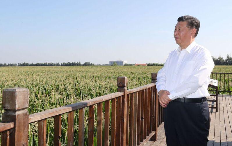 大陸國家主席習近平7月到吉林省,視察糧食生產及農地保護利用。 (新華社)