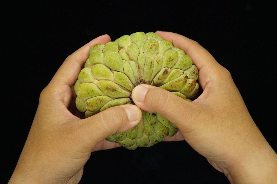 用手輕按壓蒂頭,可分辨是否已經軟熟可食。圖/台東農改場提供