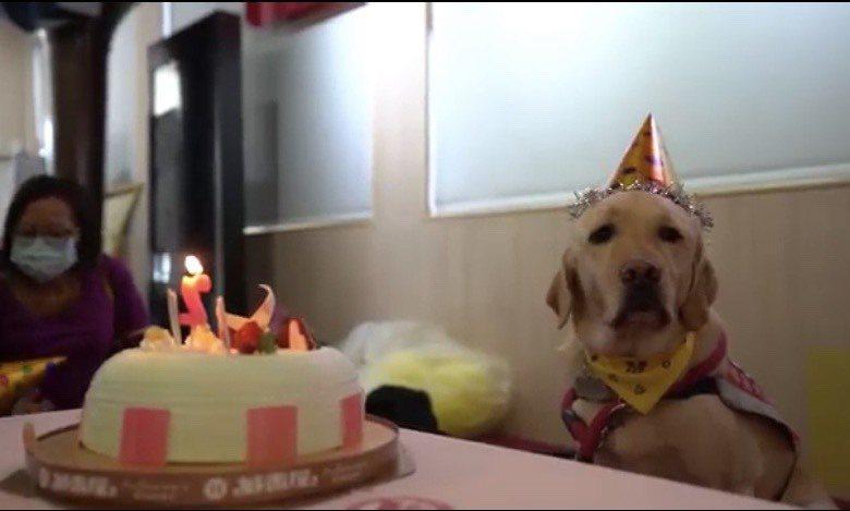 彰化基督教醫院兒童醫院和台灣導盲犬協會合作,引進了全台灣第二隻醫療輔助犬(fac...