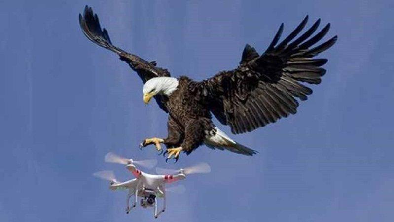 美國密西根州發生白頭海鵰攻擊官方無人機,不費吹灰之力就將價格近3萬元的無人機擊沉。圖非當事鳥。畫面翻攝:todaynewspost.com