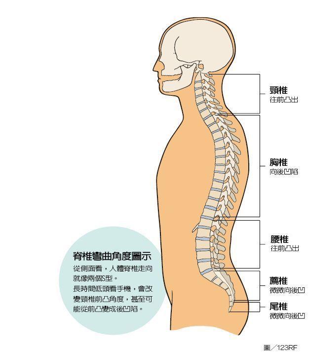 脊椎彎曲角度圖示 圖/123RF  製表/元氣周報