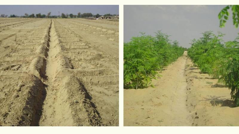 挪威一間公司發明新技術,只需要7小時就可以把沙漠變成能夠耕種的良田。(網上圖片)
