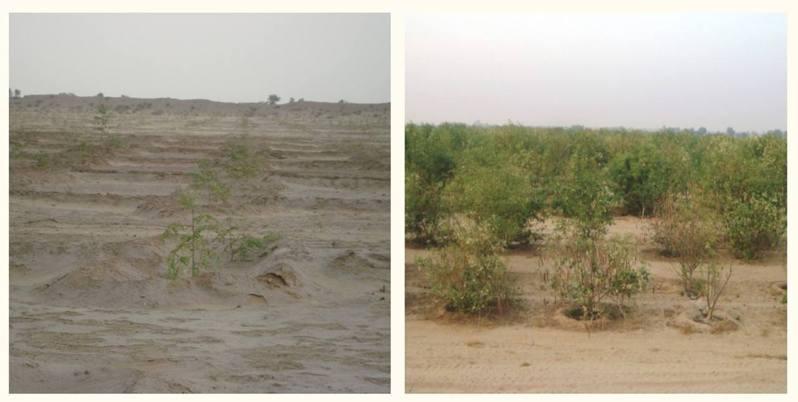 圖為Desert Control公司網站截圖,對照使用Liquid Nanoclay前和使用後一年的區別。(Desert Control網站)