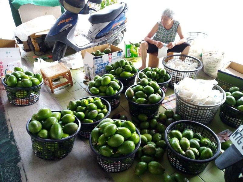 台南大內區酪梨近年因健康風興起,深受消費者青睞。圖/大內區公所提供