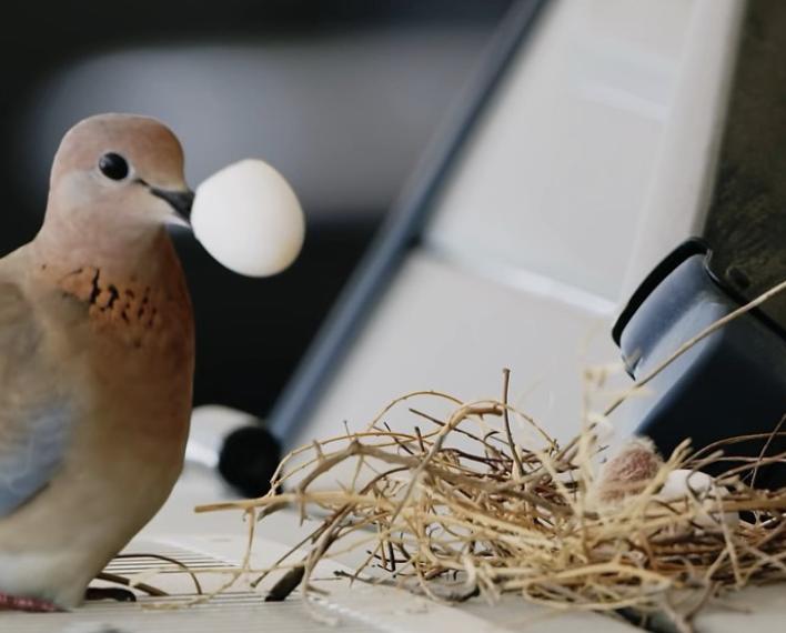 麻雀在杜拜皇室車上築巢。圖片來源/ instagram