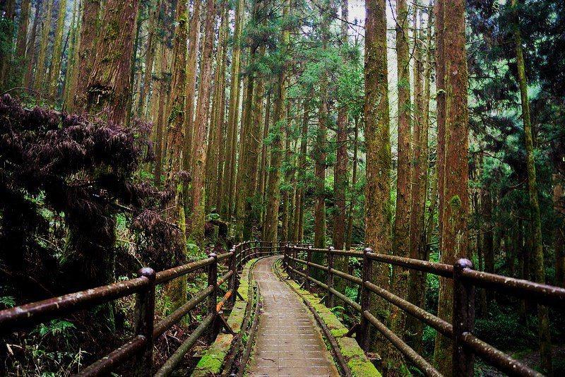 ▲最美鐵道之旅-特富野古道。(圖/Tripbaa趣吧!亞洲自由行專家)