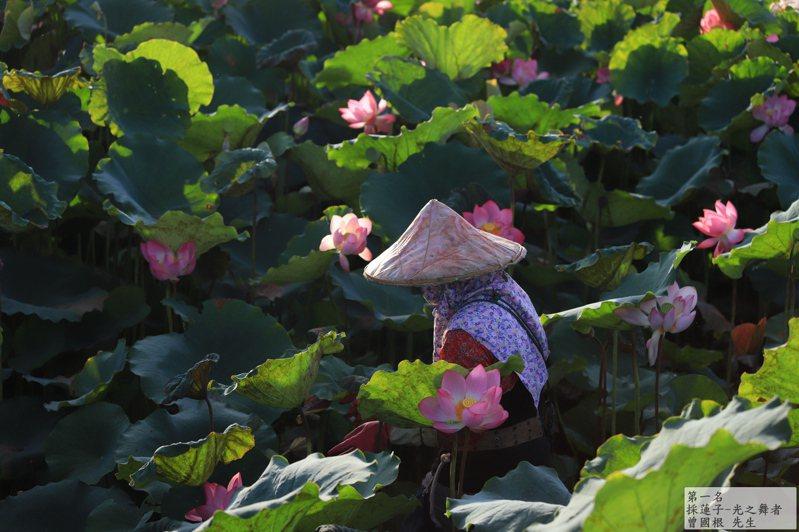 白河蓮花季 「看見白河」攝影比賽,圖為冠軍「採蓮子-光之舞者」作品。圖/白河區公所提供