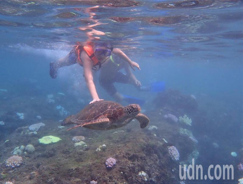 屏東小琉球今年已有9起騷擾海龜依違反野生動物保育法函送法辦案,今天又有遊客被拍到觸摸海龜,岸巡隊查出是名11歲兒童,只能勸導、制止並通知父母、監護人,讓潛水業者氣炸。圖/取自小琉球聯盟臉書