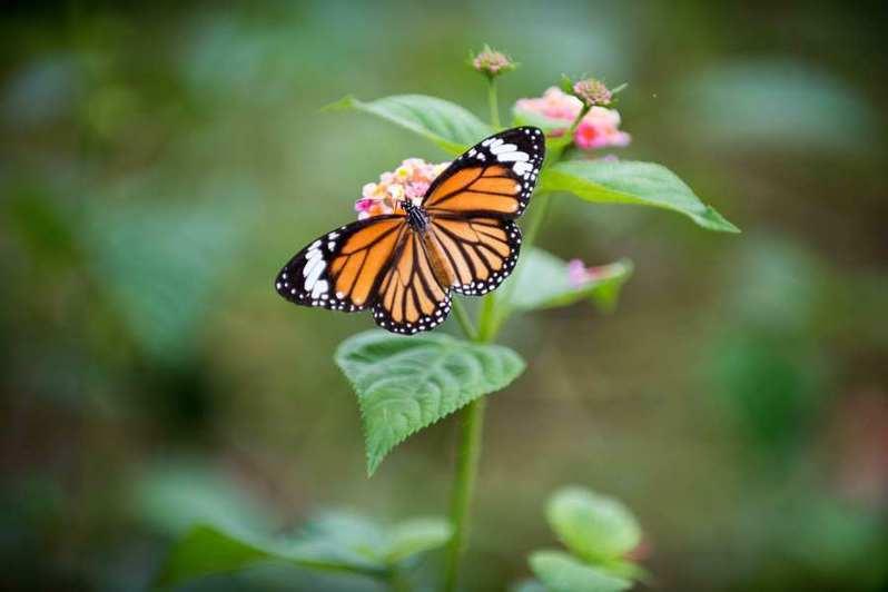香港家長流行網購毛毛蟲給孩子飼養成蝴蝶,但專家認為這樣的潮流會傷害環境。(Photo by Daniel Klein on Unsplash)