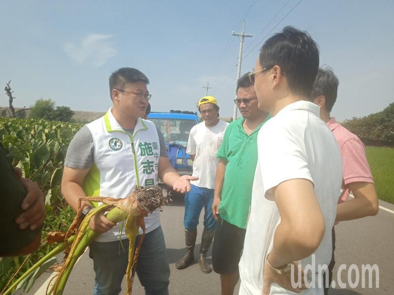 台中市議員施志昌昨天下午找農業局等單位,勘查大甲芋頭受損情形。記者游振昇/攝影