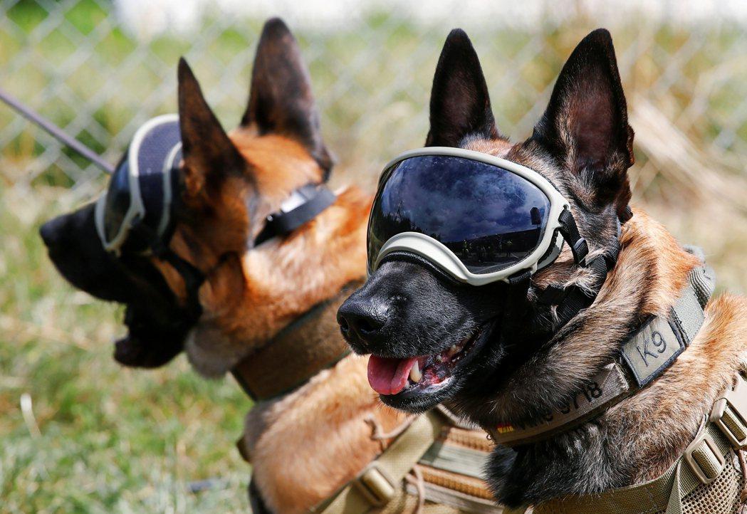 圖為德國接受訓練的軍犬。 圖/路透社