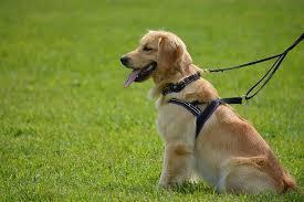 德國新法規定要好好照護寵物犬,包含定時陪伴,該國農業部長呼籲,此法是希望飼主別把寵物當成一般玩具。(photo via Pikist, under CC licensed)