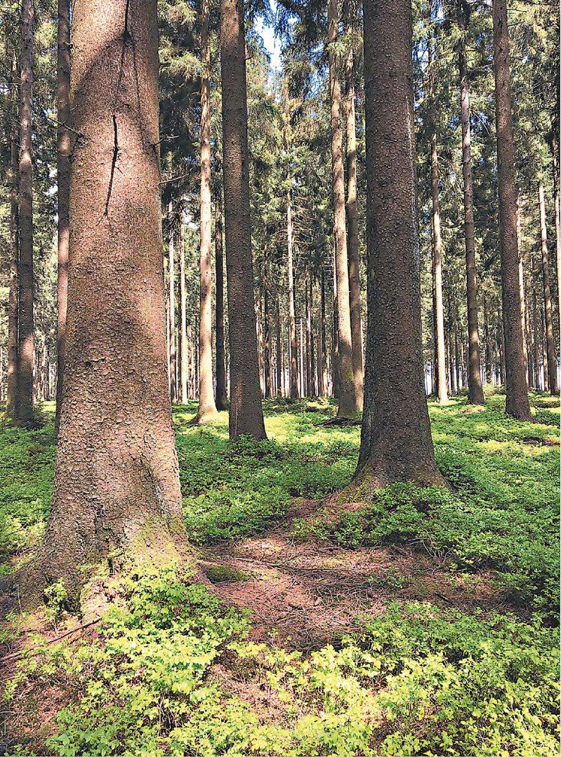 接觸某些樹木之後,你可能會覺得很累,因為樹木有助於讓人放鬆,把全部心力放在運動上。如果你感到疲倦,就一定要坐下來歇一歇。攝影/Eric Brisbare