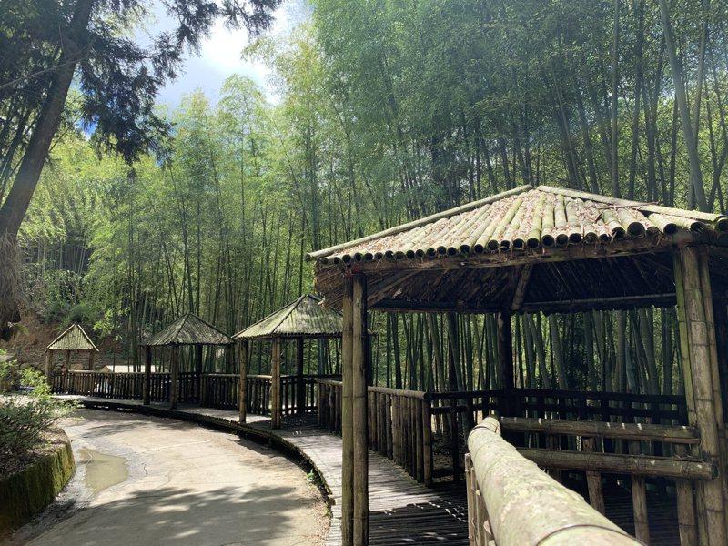 五元二角為孟宗竹編製的涼亭綠廊,是雲林草嶺石壁著名景點。記者陳苡葳/攝影