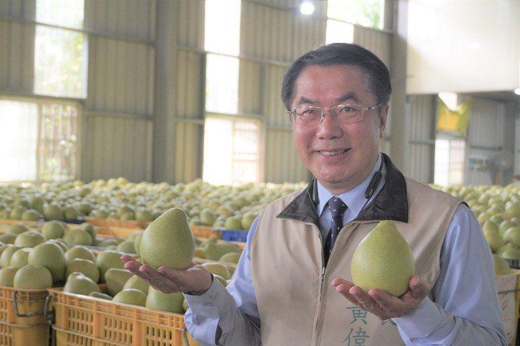 台南市長黃偉哲(右)教你挑好吃的麻豆文旦。記者吳淑玲/攝影