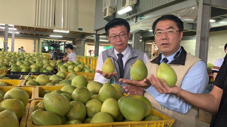 台南市長黃偉哲(右)與立委郭國文研究挑好吃的麻豆文旦。記者吳淑玲/攝影